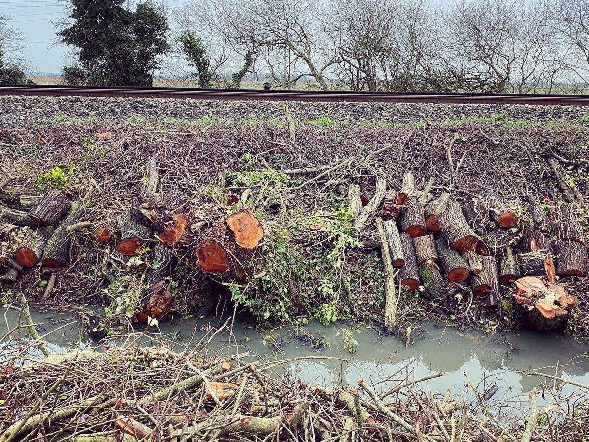 Felled mature trees along the railway tracks at Monkton. How is this justifiable? . . . . #monkton #networkrail #monktonthanet #thanet #thanettrees #tdc #thanetdistrictcouncil #ecocide #hs2rebellion @networkrail @greens4thanet @ThanetGreens @ThanetGreen @ThanetCouncil