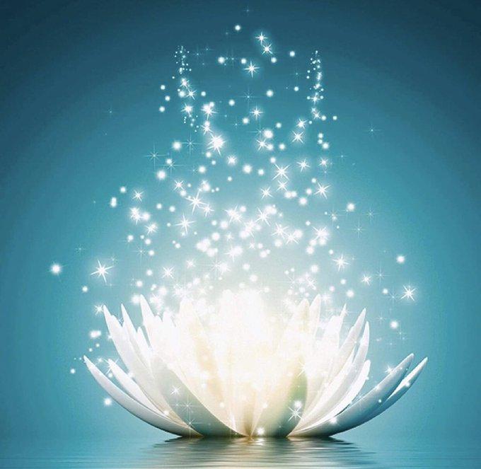 Mi año fue la Flor de Loto 💕 https://t.co/50m4wZn8Nu