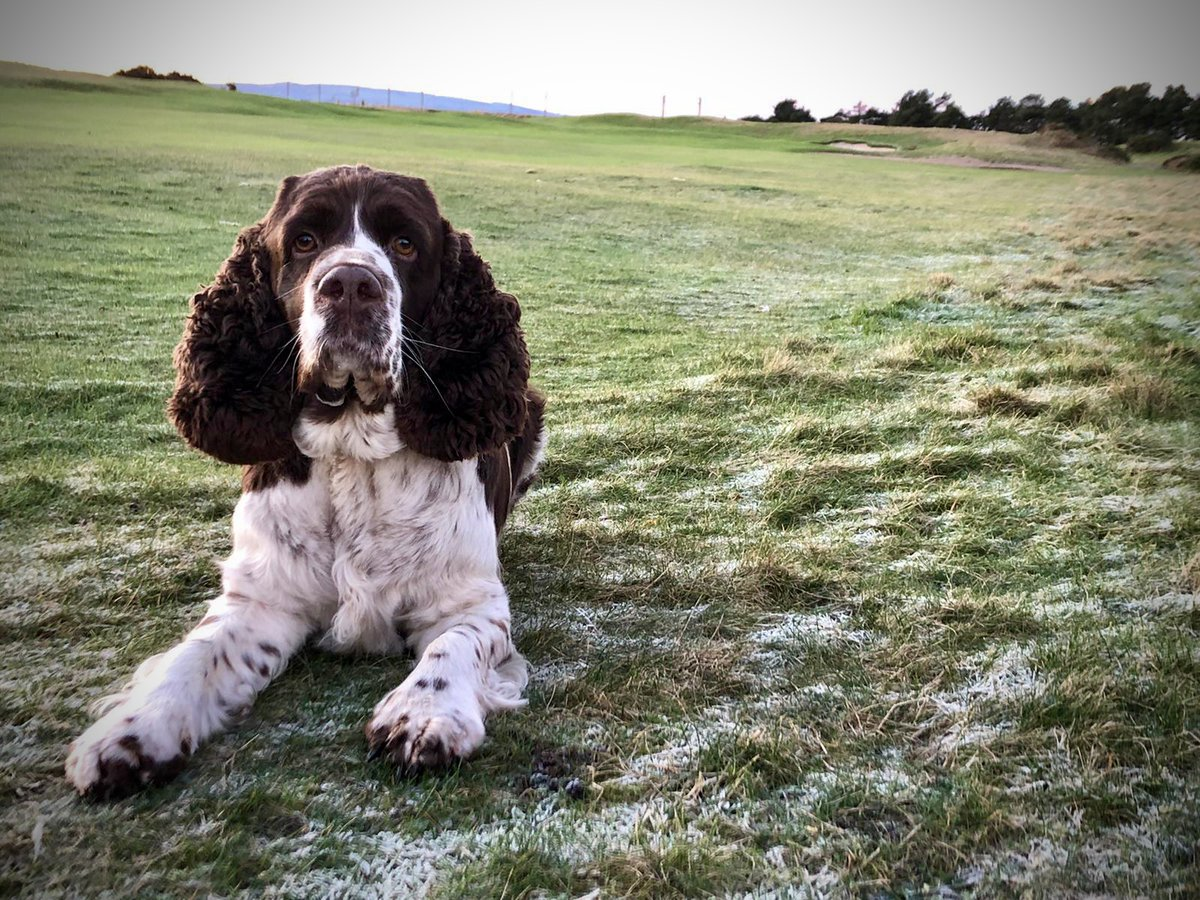 Happy New Year from Dundonald Links... 🍾 Bramble would also like to wish you all the very best for 2021! 🐶