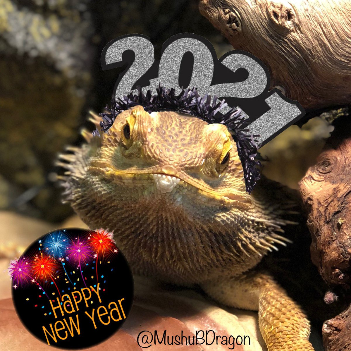 Mushu wishes all of you the best ever #2021 ! Putting 2020 behind us and starting this #newyear with hope and gratitude! 🎉♥️🌟🥳🆕🧸 🐉 #beardeddragon #beardeddragonsofinstagram #lizard #happyhanukkah @CambridgeHS1 @CambridgeBears @BearsMediaCtr