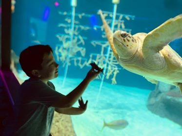 New Year's resolution: connect with the underwater world! 🐢 #FloridaAquarium #ProtectAndRestore