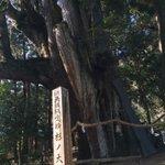 Image for the Tweet beginning: あけましておめでとうございます⛩ 行って来ました! 杉の大杉! 日本一の杉の木! 2021年2回目^_^ ビビるくらいでかい💪  #大豊  #大杉  #初詣