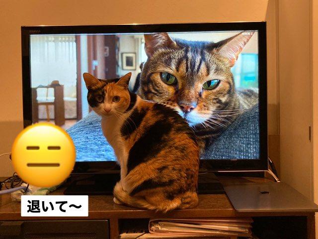 2020 ネ コメンタリー 「ネコメンタリー 猫も、杓子も。」の再放送・見逃し動画の配信情報!
