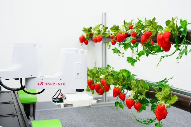 果菜類の植物工場、完全自動栽培の実現を目指すHarvestXが総額5000万円の資金調達を実施  @PRTIMES_JPより