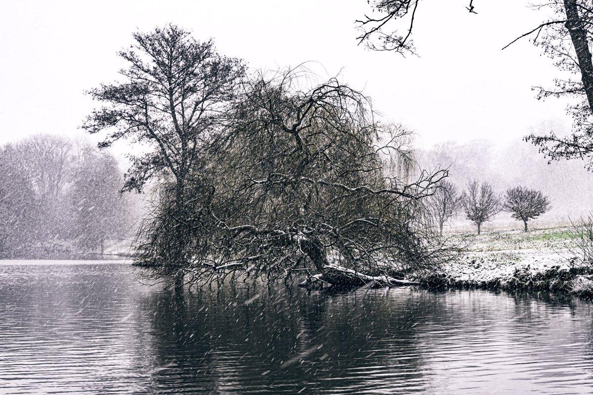 #nature #photography #naturephotography #photooftheday #landscape #naturelovers #beautiful #picoftheday #photo #nikon #wildlife #winter #snowday #tree #winteriscoming #snow  #naturelover #seineetmarne #photographer #nikonphotography