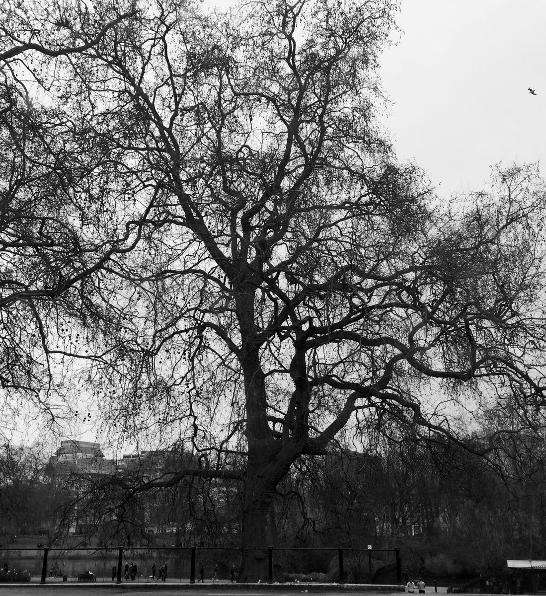 """""""That grand old poem called Winter"""" - Henry David Thoreau #WINTER #WinterGarden #photography #PhotoMode #blackandwhite #blackandwhitephotography #FOTOS #Fotogaleria"""