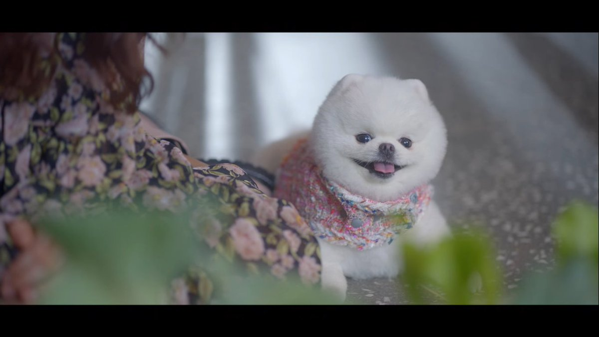 Watching Do Do Sol Sol La La Sol just made me want to get a puppy for myself. Just look how cute she is! #DODoSolSolLaLaSol #Pomeranian #dog #kdrama #Netflix #cute #mimi
