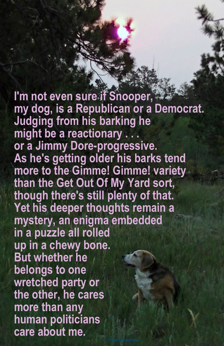 Not sure if my #dog is a #Republican or a #Democrat. From his barking he might be a #reactionary...or a  @jimmy_dore #progressive. As he ages his barks  tend more to the Gimme! Gimme! variety than the Get Out Of My Yard sort. His deeper thoughts remain a mystery,  an enigma...