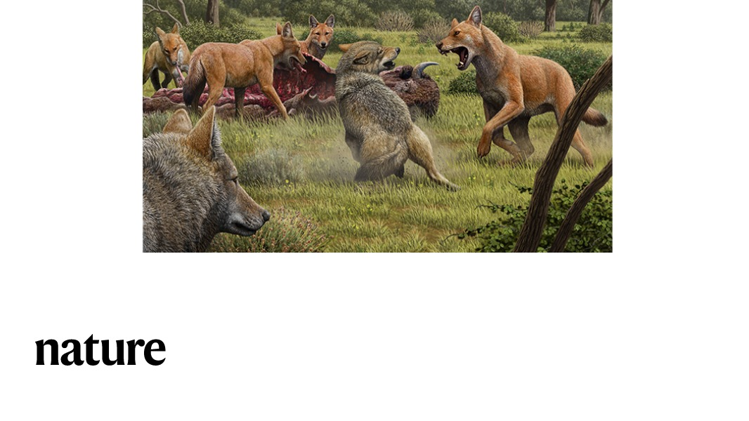 Dire wolves last shared a common ancestor with living wolf-like species approximately 5.7 million years ago, according to a Nature paper. The findings also suggest that this extinct species originated in the Americas. https://t.co/LUeHjmbhpl https://t.co/iWRoeIgS0o