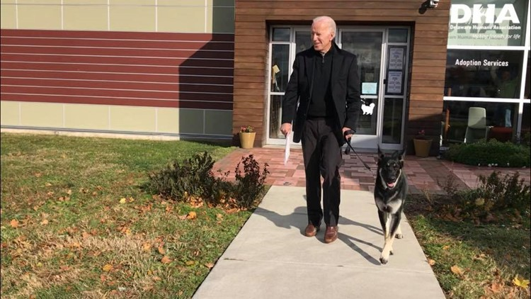 FIRST DOG | President-elect Joe Biden's German Shepherd, Major, will be first shelter dog to live in White House