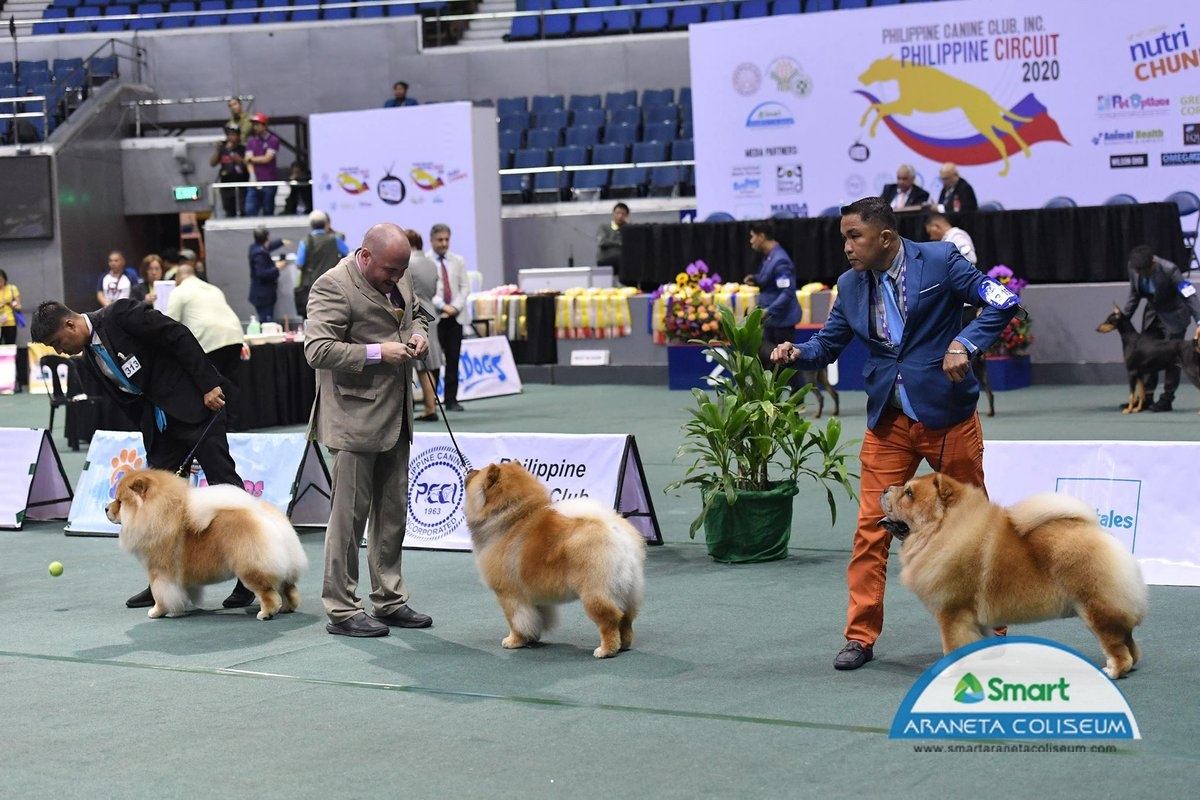 New week ahead! 🌤✨ Here's a PAWrfect 🐾 throwback from last year's Philippine Circuit Show! Don't you just miss seeing these cuties flex their skills? 🥺  #ConcertAnniversary #PCCI2020 #DogsOfTwitter #TheBigDome