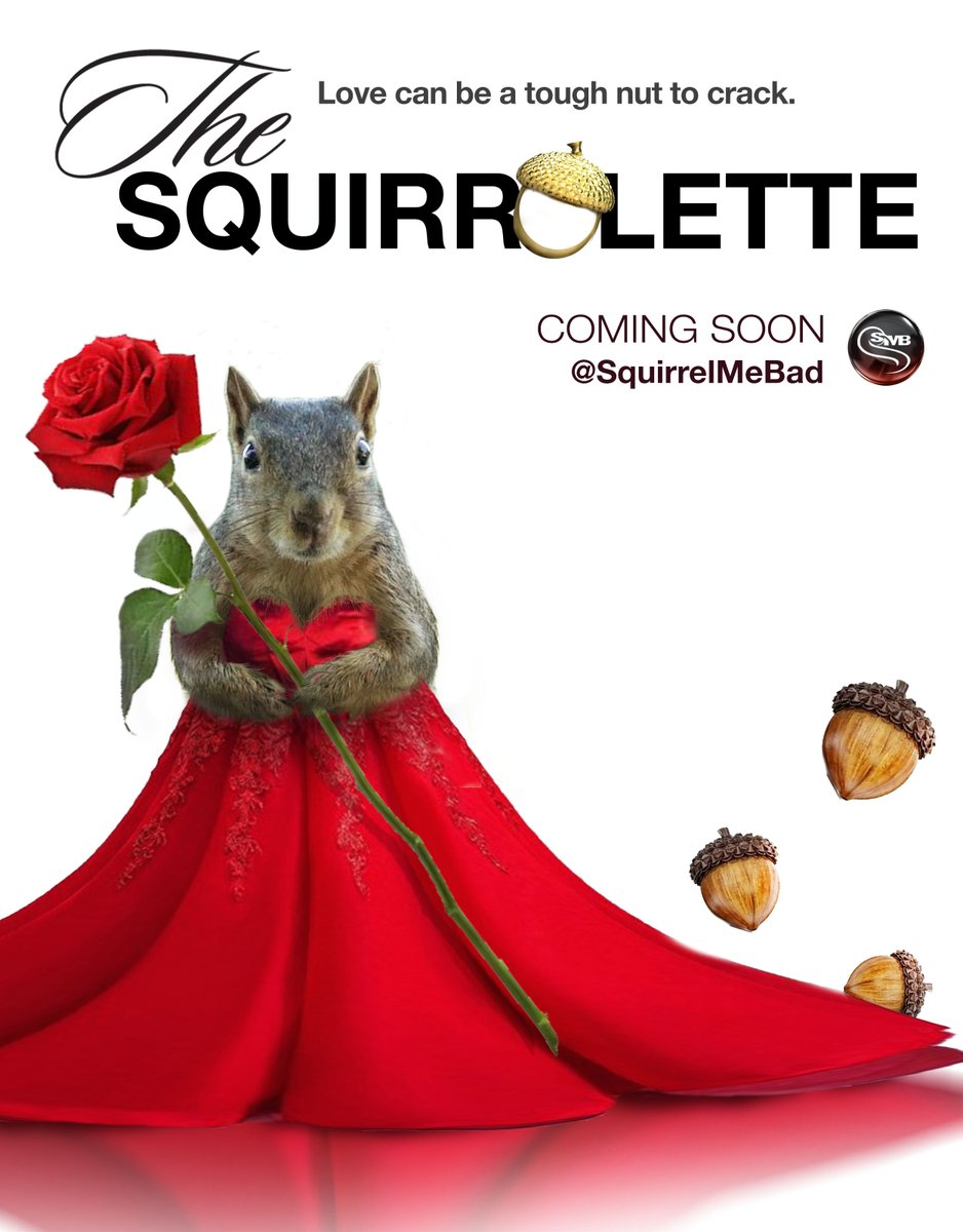 Announcing the very first squirrel bachelorette... Spazzy! 🐿🌹❤️ SMB is now looking for eligible suitors for this stunning beauty. Stay tuned for details! #squirrellovers #BachelorNation #SquirrelMeBad