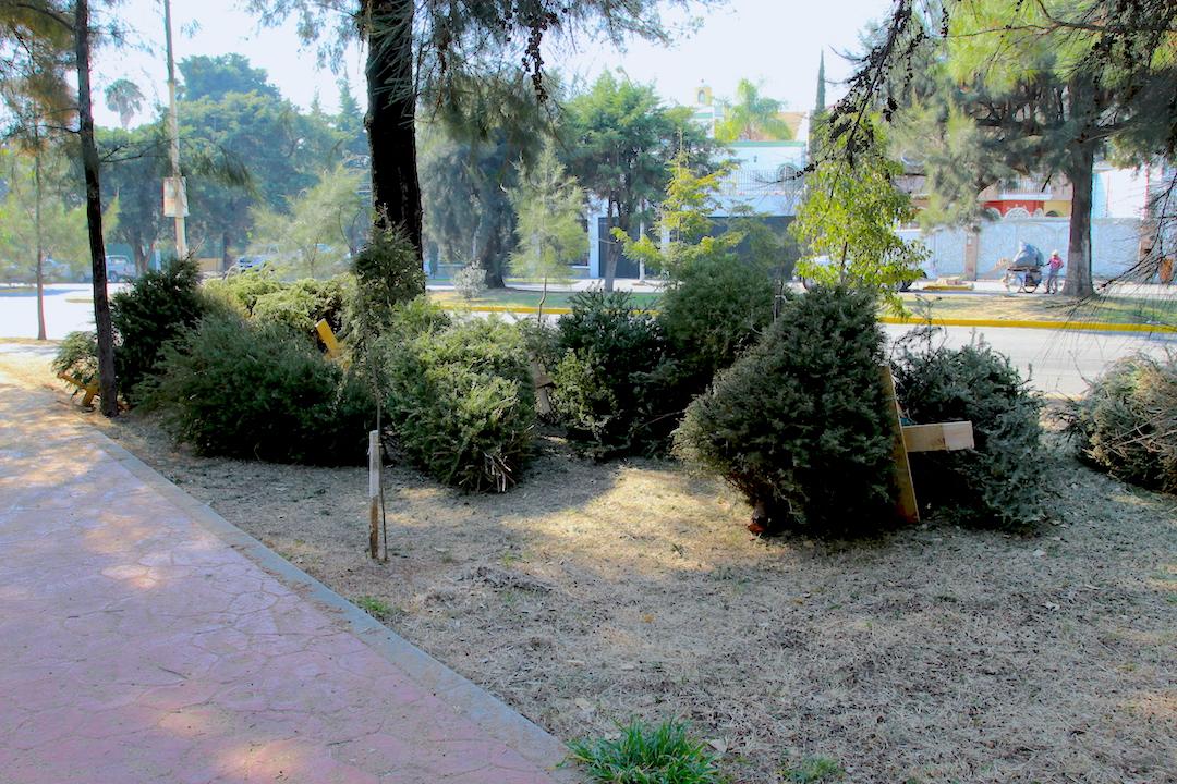 ♻️Recicla tu árbol natural de #Navidad   #NuevoLeón dispone de 5⃣8⃣ centros de acopio en 3⃣ municipios: #Monterrey, Escobedo y San Nicolás de los Garza  #NoLoTires  ✖️ #NoLoQuemes ✖️ ¡Cierra el ciclo! ✅  🖱️Directorio 🇲🇽 👉https://t.co/2GaRPcuakR o acércate a tu municipio🚶 https://t.co/PiAMu9jDfi