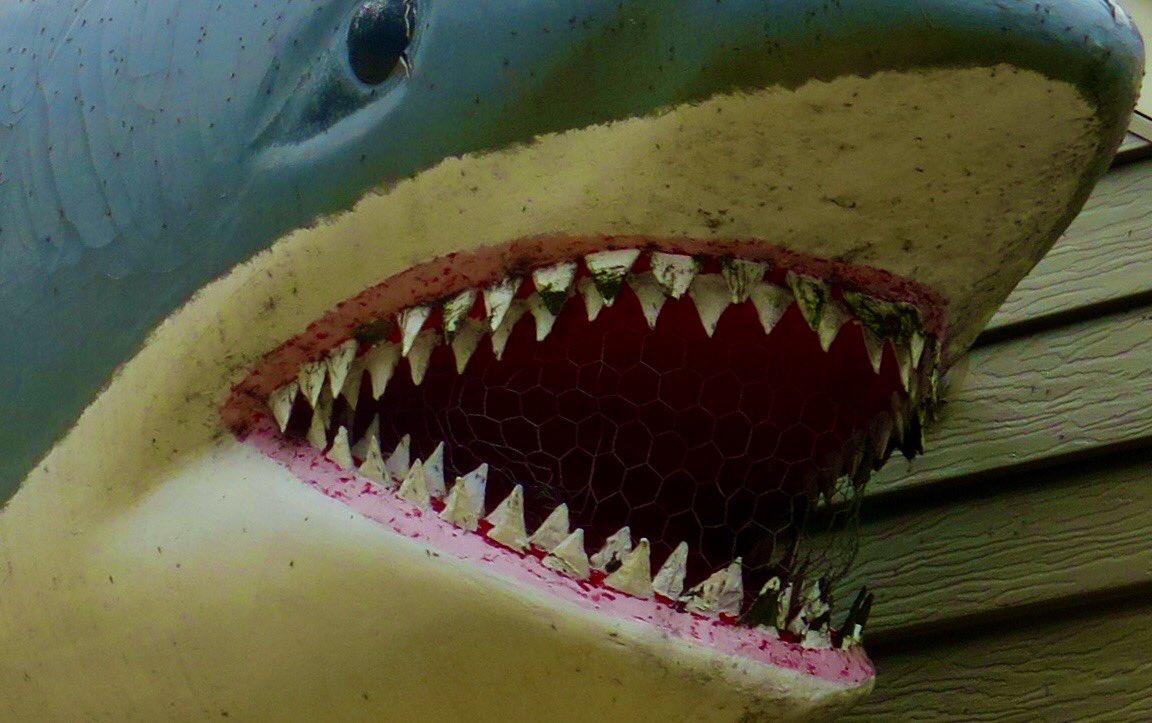 #gratitude for this garage shark.keeping Cudahy strange https://t.co/sV2ZxSYNcg