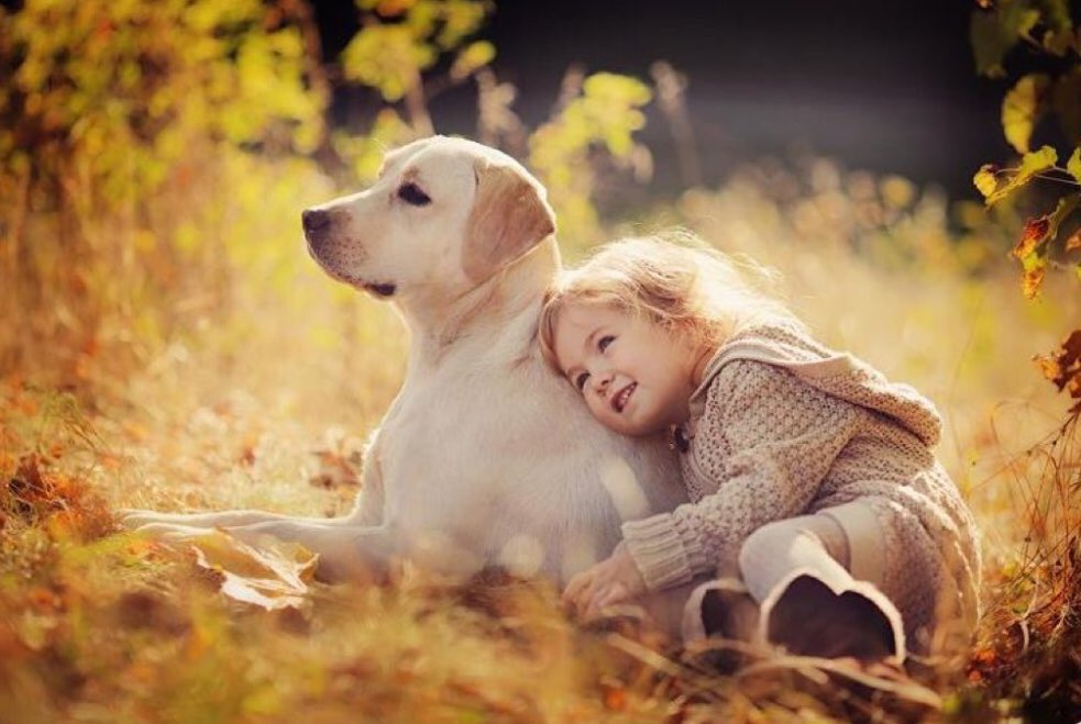 """Dog Spelled In Reverse Is Not An Accident."""" ~#BuddhaBrian   #Joy #God #Dog #UnconditionalLove #DogsOfTwitter #Happiness #Loyal #Gratitude #Forgiveness #Friend https://t.co/Wz8FmPVbtM"""
