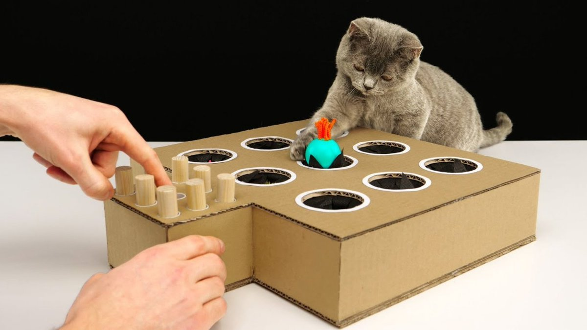 DIY Peek-a-Boo Cat Toy  Click on the link below.   #pets #petlovers #cattoys #cutecats #cute #Petkonnect