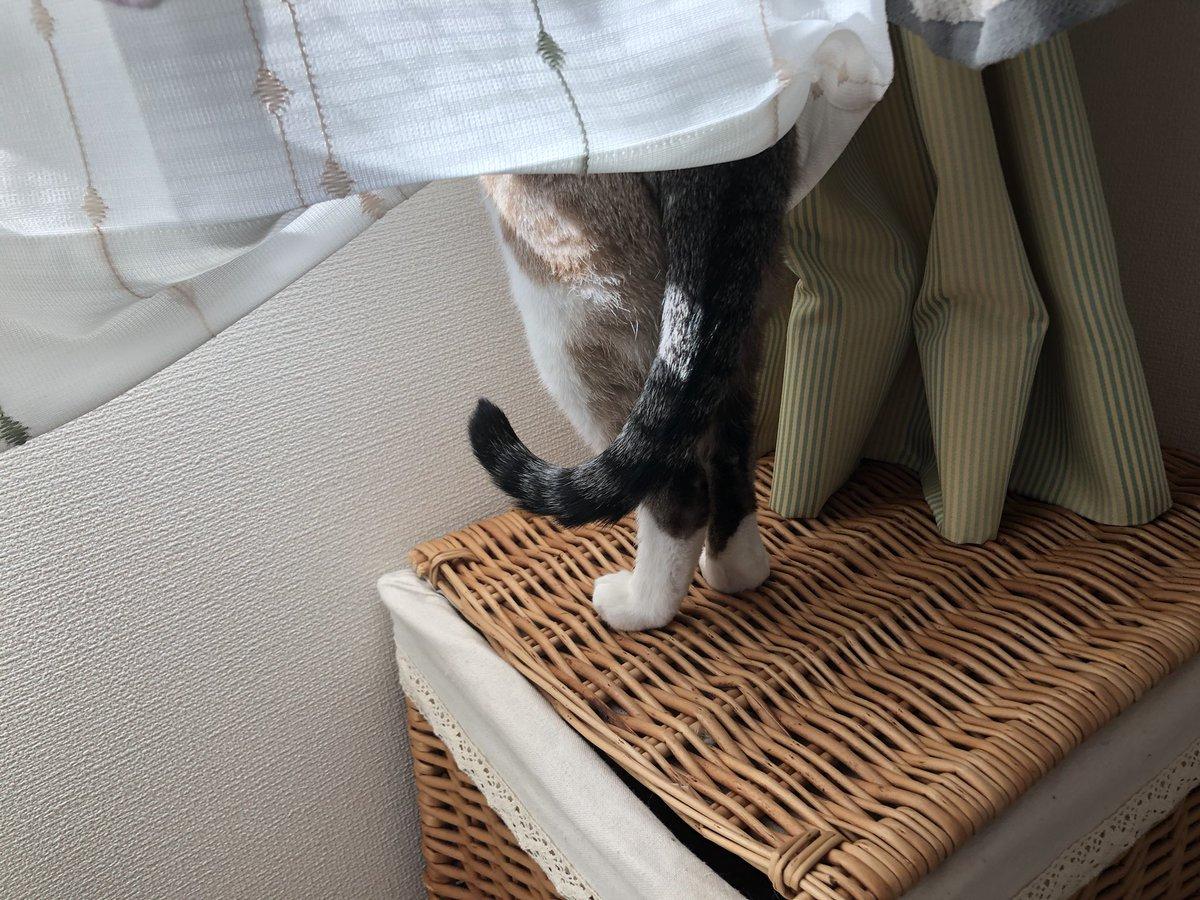 今日も一所懸命外眺めていました🤤猫のまみちゃんです🐰 #猫のまみちゃん #猫好きな人と繋がりたい #猫好きさんと繋がりたい #ねこのきもち #ねこすたぐらむ #猫 #ねこ #猫のいる生活 #猫のいる暮らし #愛猫 #リトルキャッツ出身 #にゃんくる卒業 #cat #catstagram #catsofinstagram #cute #かわいい