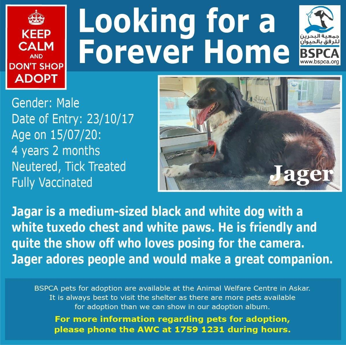 Jagar is a gentleman with impeccable lineage and wears a tuxedo to every event 🐶  Jagar would love a forever home where he could show you what a good boy he is.  Tel: 17591231  #Bahrain #Adopt #AnimalWelfare #dogs #cats #charity #spca #donate #volunteer #Gentleman