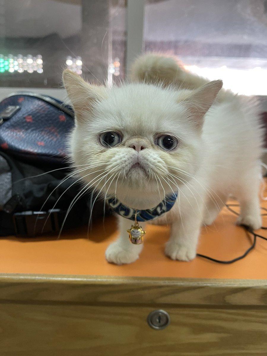 yuki #cats #cute #CatsOfTwitter
