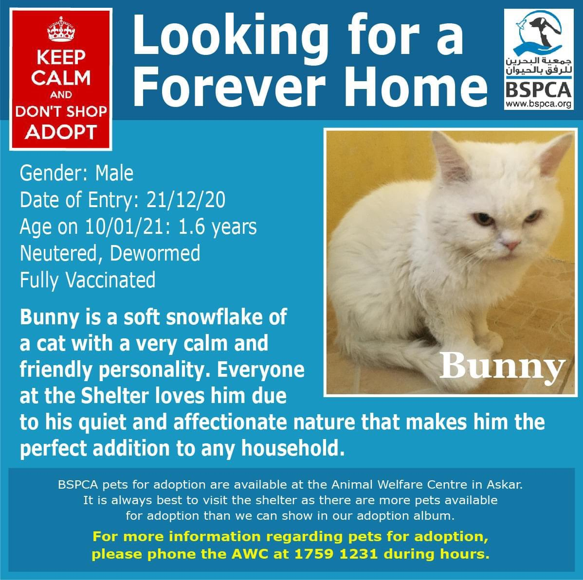 Bunny, not to be confused with our bunny rabbits, is a beautiful silky snowy young catto 😻  Bunny is quiet and affectionate and would make the purrrfect pet ❤️  Tel: 17591231  #Bahrain #Adopt #AnimalWelfare #dogs #cats #charity #spca #donate #BenefitPay #rescue #spca #volunteer
