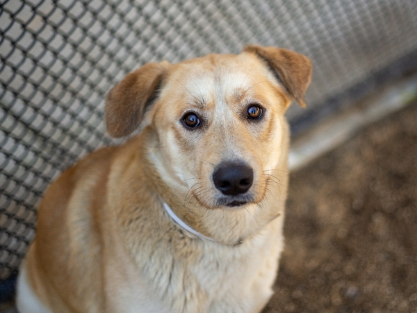 #Dog #Rancher_CCSTCA_01 Not only is Rancher adorable but hes sweet and fun!