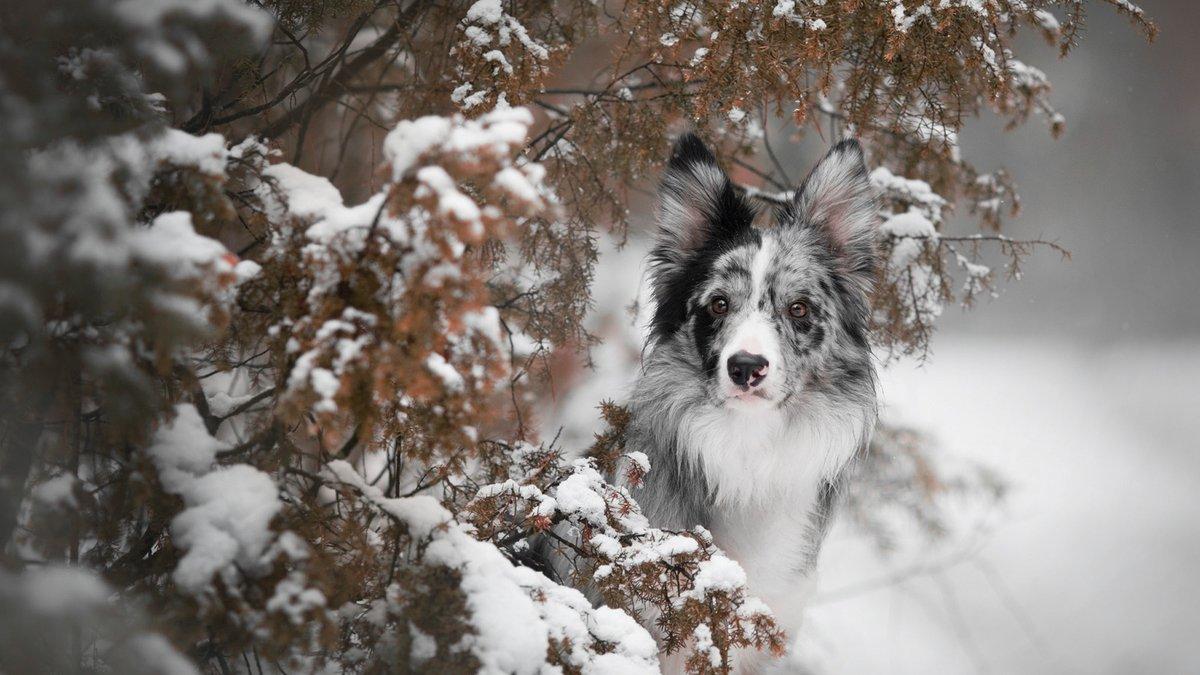 За даними УкрГідрометцентру, 16 січня в Україні очікується значне зниження температури: вночі до 12-18° морозу, місцями в північних областях до 21° морозу, вдень до 10-16° морозу; 17-18 січня холодна погода утримається. По Києву 16 січня також очікується зниження температури https://t.co/H1pdfXW4np