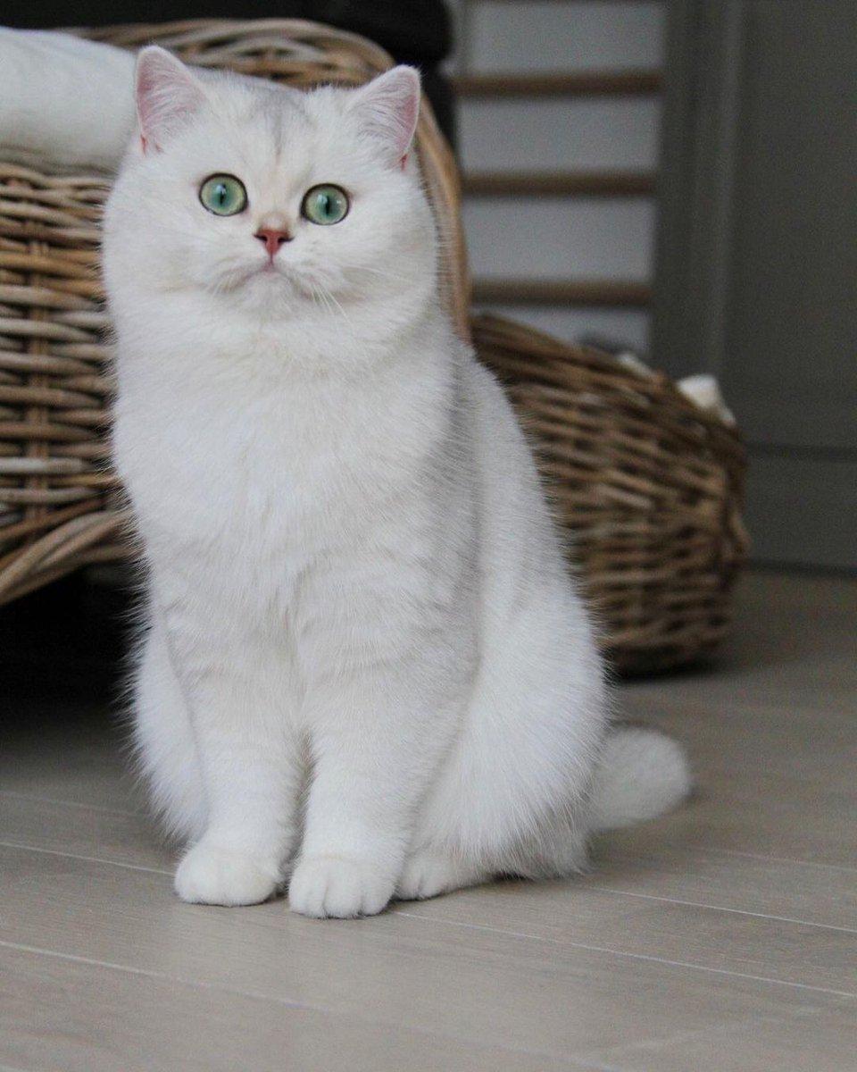 So Sweet   #Cat #Catlover #CatMom #dustin #OneNightInMiami #WandaVision