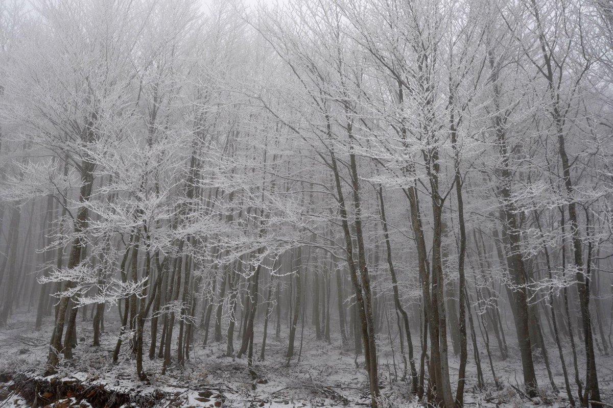 Γρεβενά, Χ/Κ Βασιλίτσας #tbt #greece #winter #grevena #snow #snowmountain #snowmountains #mountain #mountains #tree #trees #forest