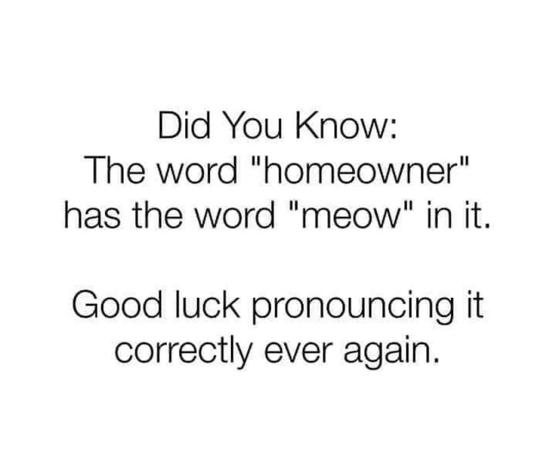 You're welcome 🐈⬛ #Caturday #CatsOfTwitter #SaturdayVibes