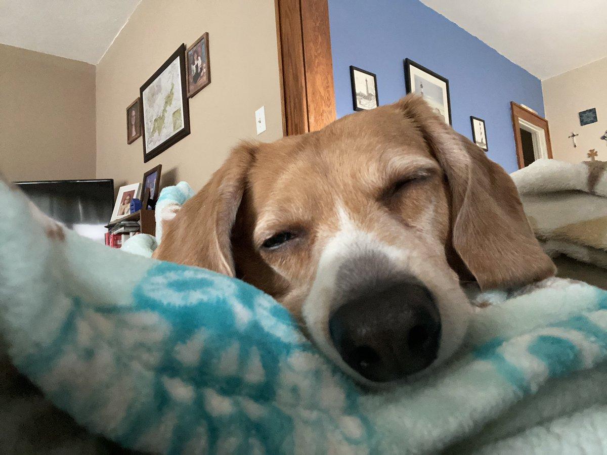 How I'm feeling today. 😴 #SaturdayVibes #beagle #abeagleslife