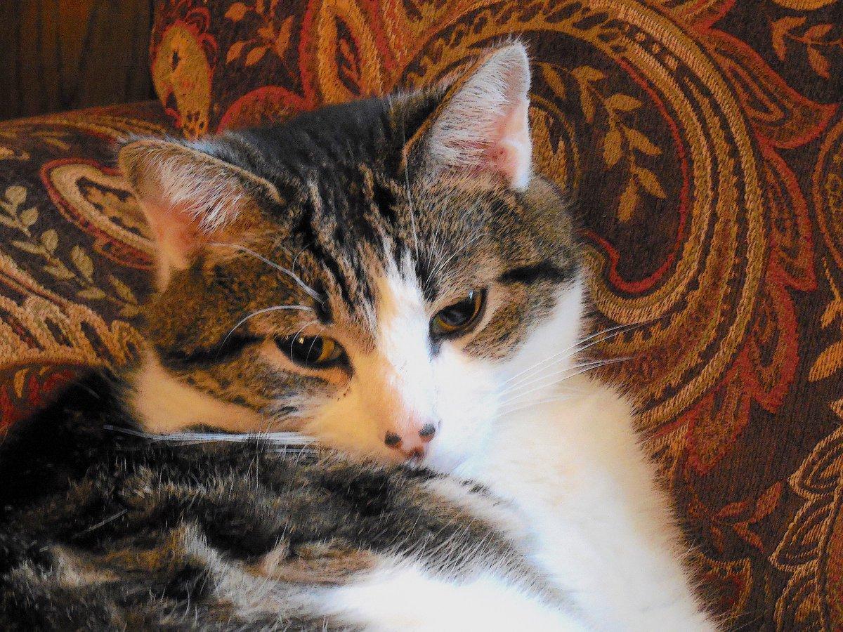 Happy #caturday #cats #catsoftwitter #Saturdaymorning