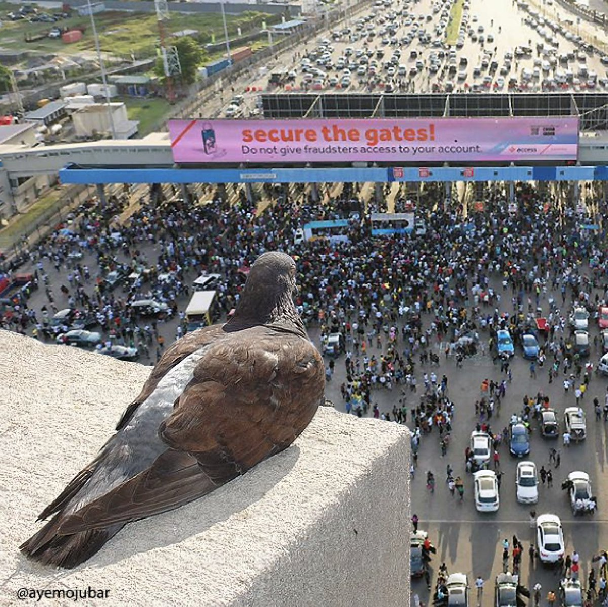 The Pigeon Who Saw Everything. 😭 #EndSARS  & #EndBadGovernmentInNigeria