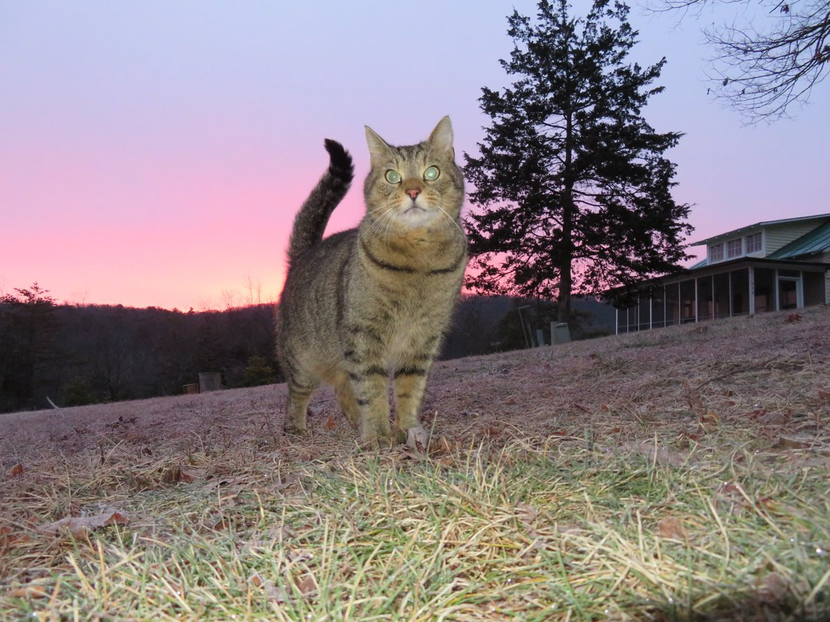 Buddycat a #cats #CatsOfTwitter #weekend #weathercat, reports 28F @ThePhotoHour in Basye, Va @BobVanDillen #SaturdayMorning. A #photooftheday @WHSVBen & @WHSVaubs @WHSVnews? A #weather #photo @wusa9 @MiriWeather & @chesterlampkin. #sunrisephotography @hbwx #Caturday pink #clouds!
