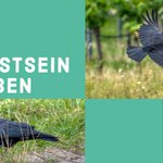 Image for the Tweet beginning: omega tau 360, Bewusstsein bei