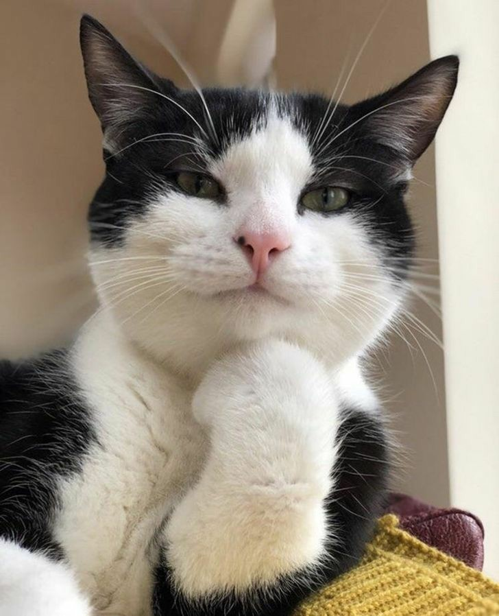 Replying to @voglioilsushi: chloe decker as a cat - a thread🐈✨: