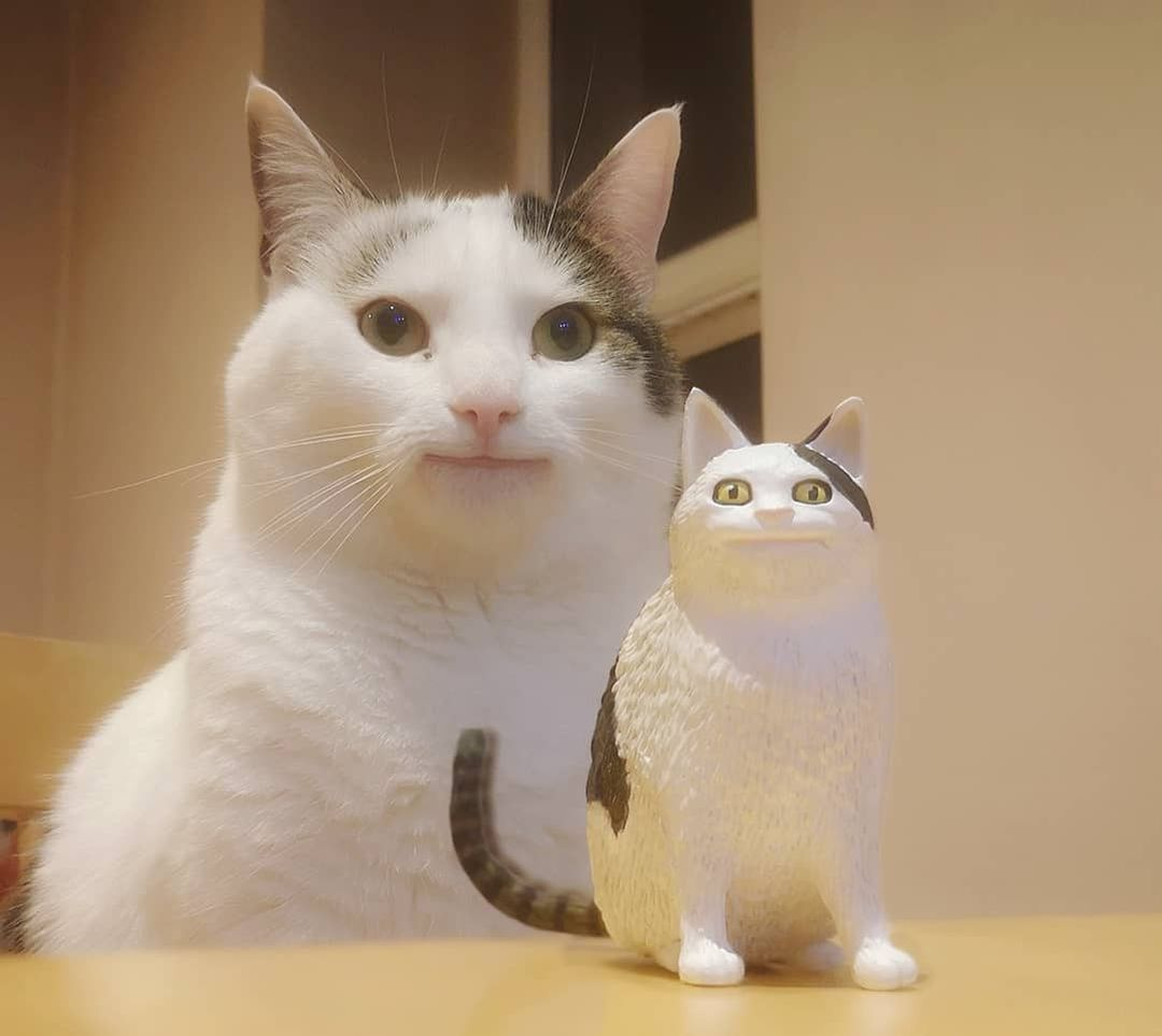 Mini me😼  📸 polite_cat_olli_official | IG