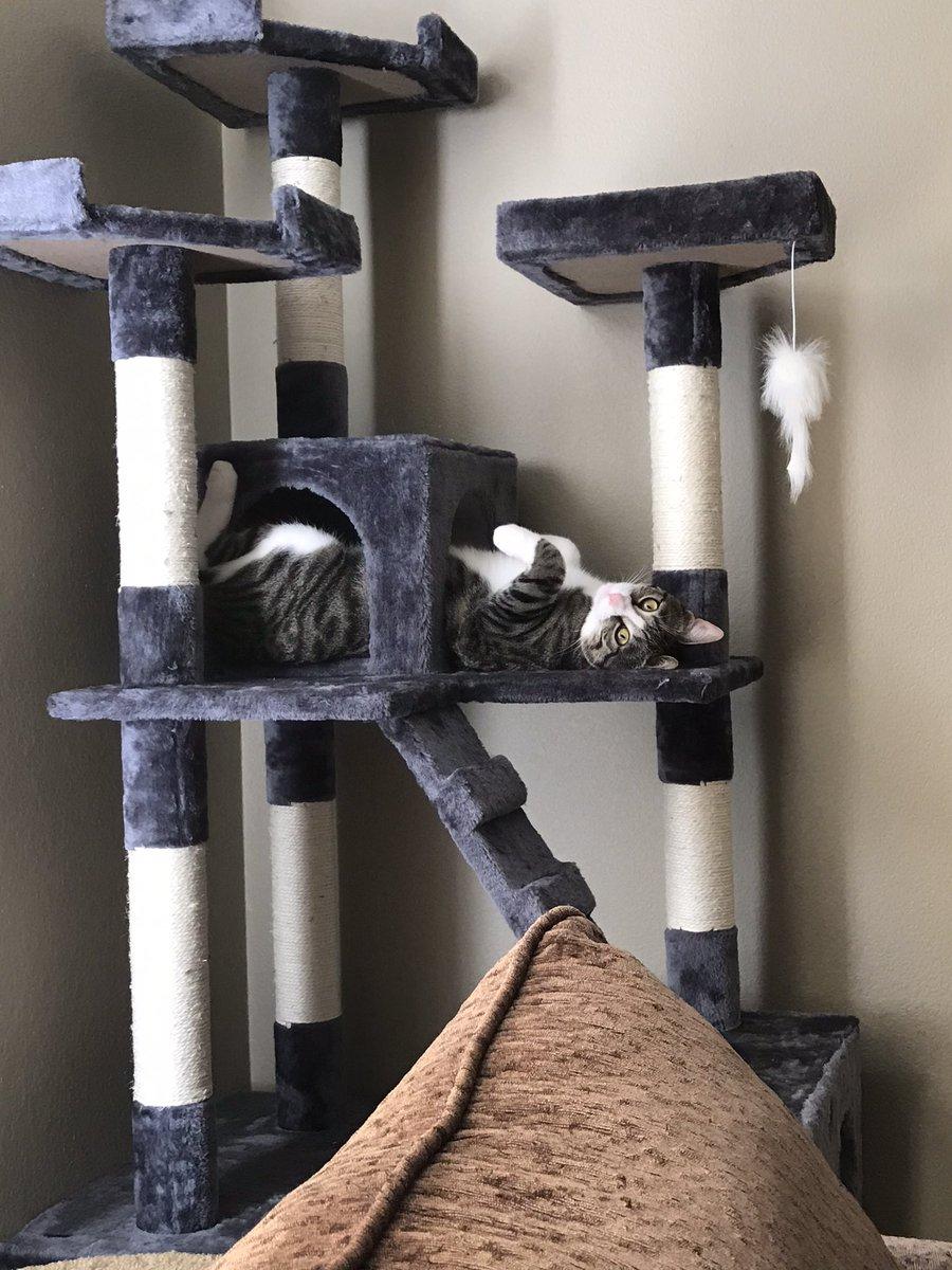 What!? #holmesthekitten #CatsOfTwitter #Caturday