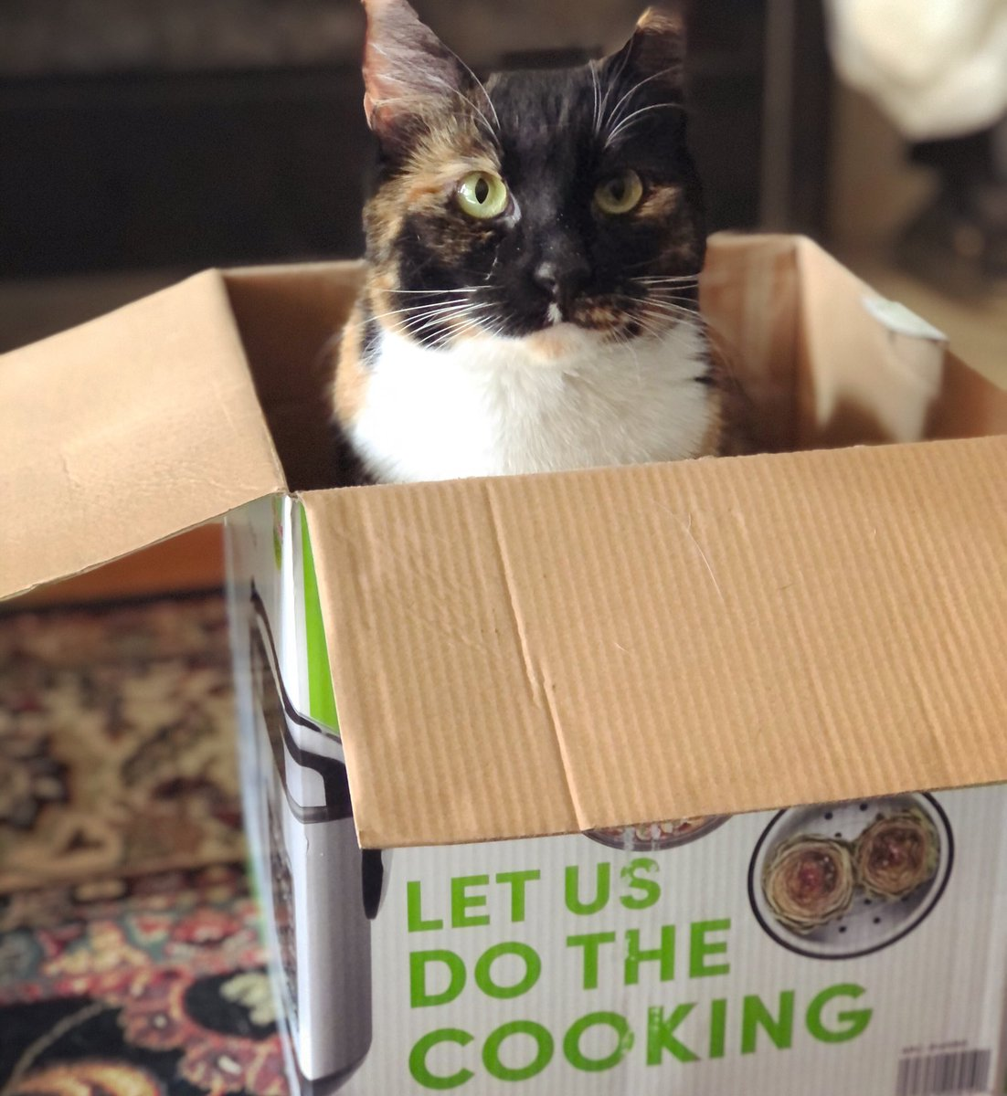 Happy Caturday! Chef Nitro would like to remind you that the initial step in any good recipe is to first ... sit in the box 😂 . #caturday #catlover #catlovers #catitude #neko #gato #tortiseshellcat #tortie #tortitude #tortieproblems #catproblems #catoftheday #catlife #rescuepet