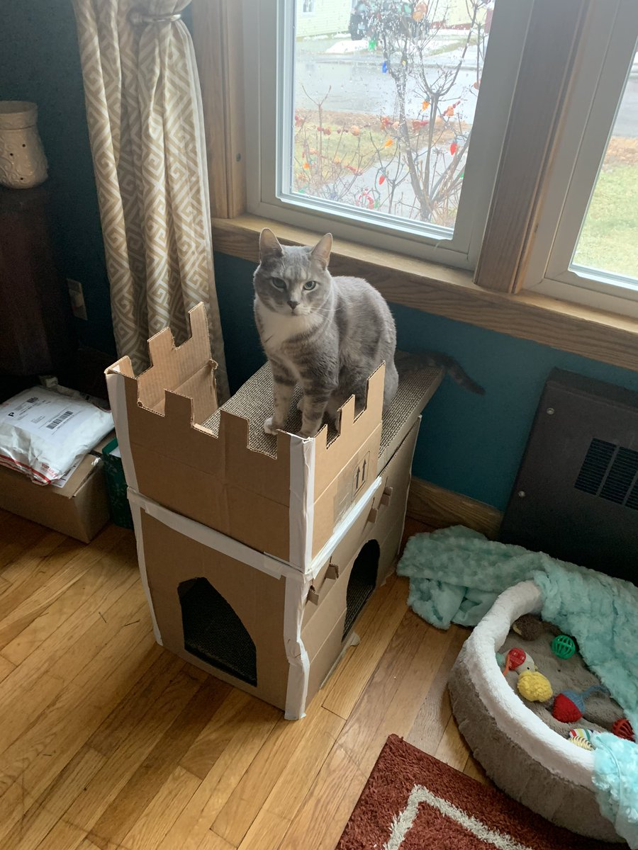 "We are at ""I built a parish church for my cat"" stage of the pandemic.  Welcome to Saint Joseph-in-the-Living-Room. #Caturday #CatHolic"