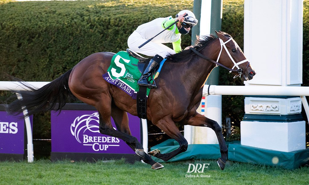 test Twitter Media - Proud of @BSWCrow having back to back 2YO Eclipse Award Finalists in @BreedersCup winners British Idiom and Aunt Pearl. Being considered among the best in their crop from 20k+ foals that compete for these awards each year is amazing. Big thanks to @bradcoxracing and @paulmsharp https://t.co/gtYjdBaTQt