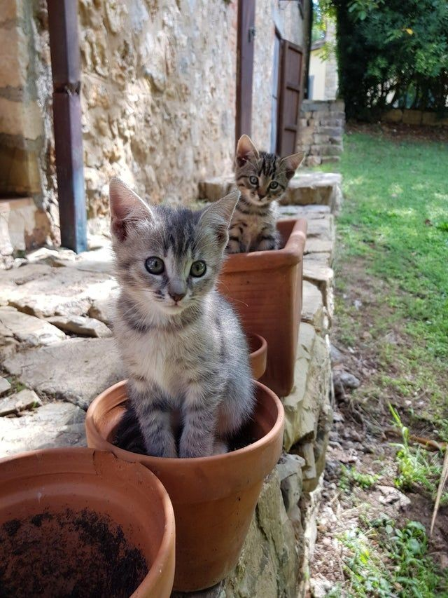 #Caturday  #cats #kittens It appears the spring kittens are sprouting up early this year! Lol..