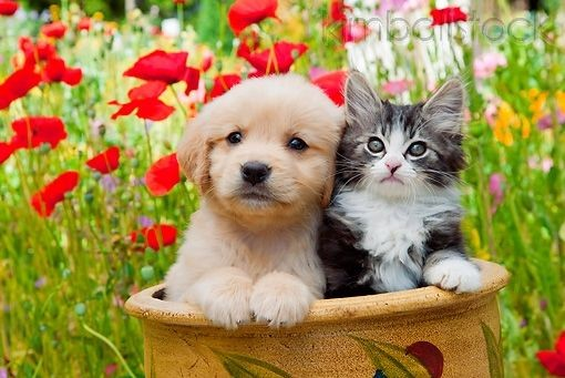 #Caturday  #cats #kittens #puppy
