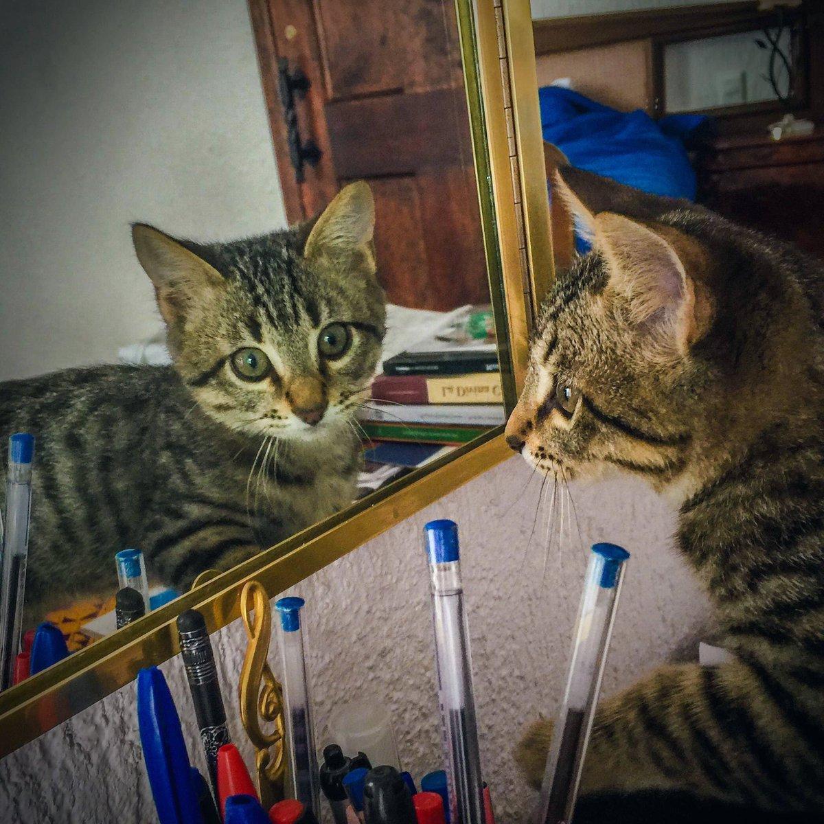 Paquito bebé en 2015. Ahi tenia como 3 meses. Feliz caturday!😽❤️ #Caturday #cats