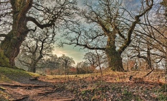 Replying to @LGSpace: A single 400-year-old ancient oak produces 234,000 litres of oxygen a year, and may support more than 2,000 species of bird, insect, fungus, and lichen. Let's look after the trees 🌳 Via @WoodlandTrust #wellbeing #nature #wildlife