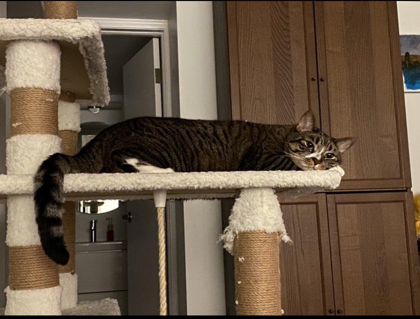 #Caturday My baby boy Houdini just lounging around