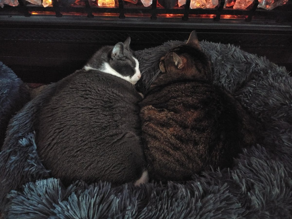 @RadioShannon Soooo sweet.😻 My 16 yr old Mr & Mrs are keeping each other warm.😽😽 Happy #Caturday to you too!