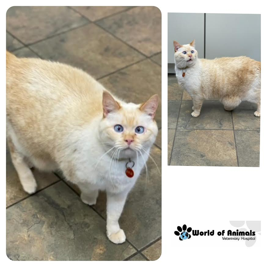 🐾Handsome Gozer Came In To Visit Us!!😺 #philadelphia #CatsOnTwitter #catsoftwitter #Caturday
