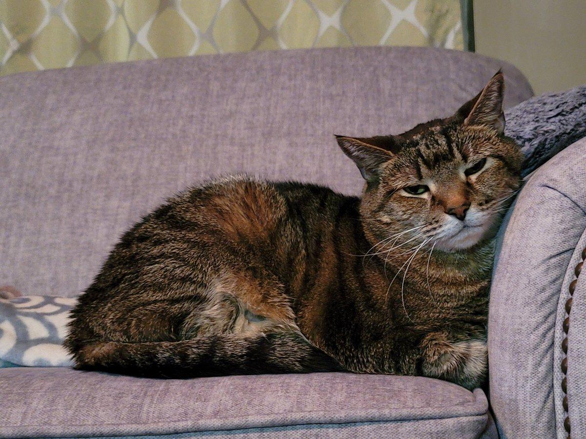 @LouDPhillips @YMPhillips Happy #Caturday Lou