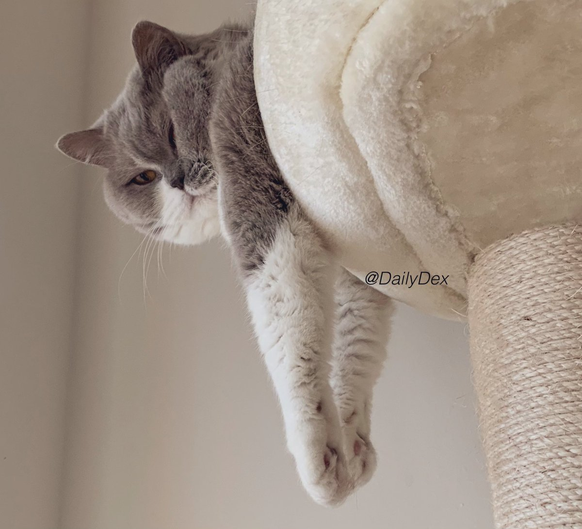Hanging out in my cat tower this #Caturday 😺💤😺  What are your plans today, friends? 😽 #SaturdayMotivation #CatsOfTwitter #SaturdayVibes #SaturdayThoughts #SaturdayFun #CatLife #Saturday