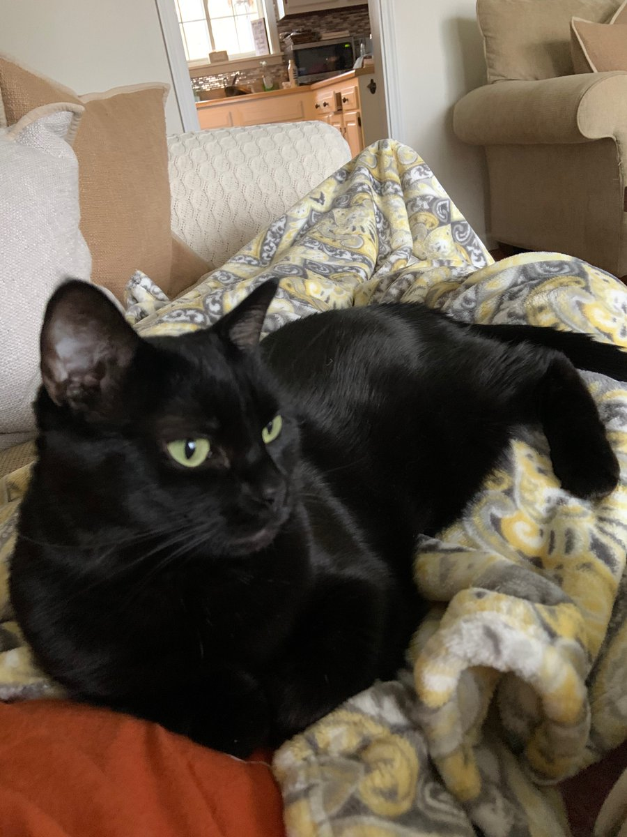 #Caturday morning cuddles with my human. ❤️🐾 #panfursquad #Blackcats #Blackcatsrule #SaturdayMorning #SaturdayVibes